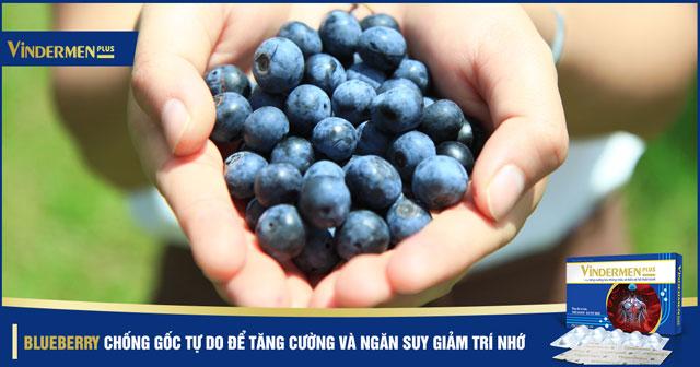 Blueberry chống gốc tự do - suy giảm trí nhớ